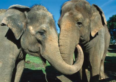 elephant hugging